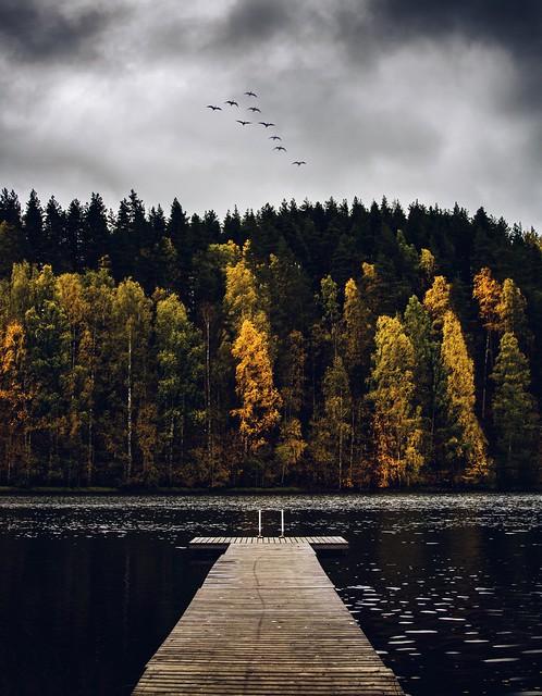 Luontokuvaus