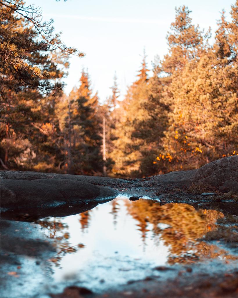 Luontokuva_Helsinki