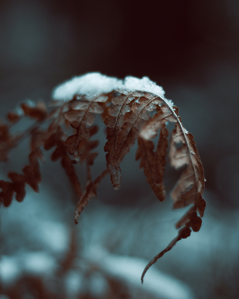 Luontokuva_suomi